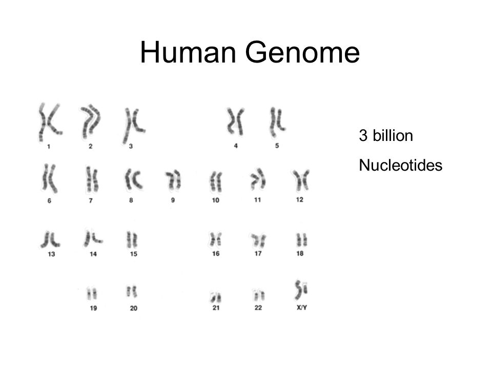 Human Genome 3 billion Nucleotides