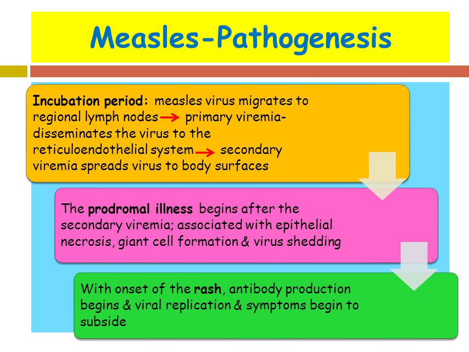 Measles-Pathogenesis Incubation period: measles virus migrates to regional lymph nodes primary viremia- disseminates the virus to the reticuloendothel