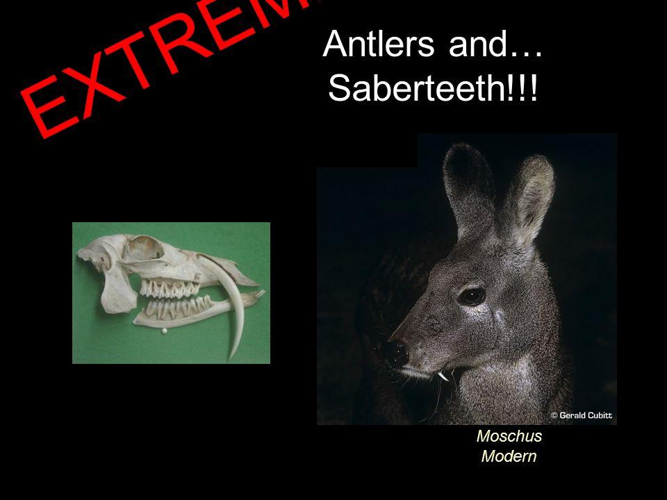 Antlers and… Saberteeth!!! Moschus Modern EXTREME!!!
