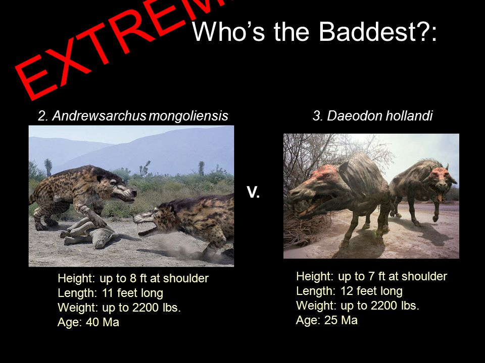 Who's the Baddest : 2. Andrewsarchus mongoliensis3.