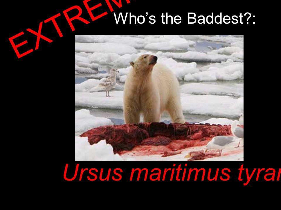 Who's the Baddest : EXTREME!!! Ursus maritimus tyrannus!!!