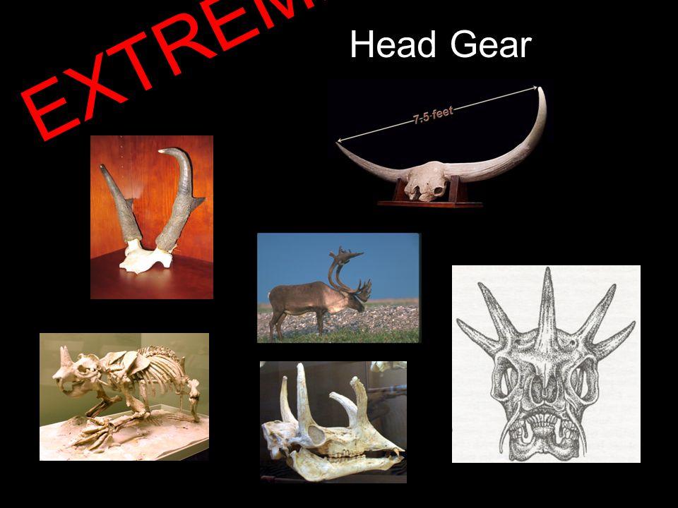 Head Gear EXTREME!!!
