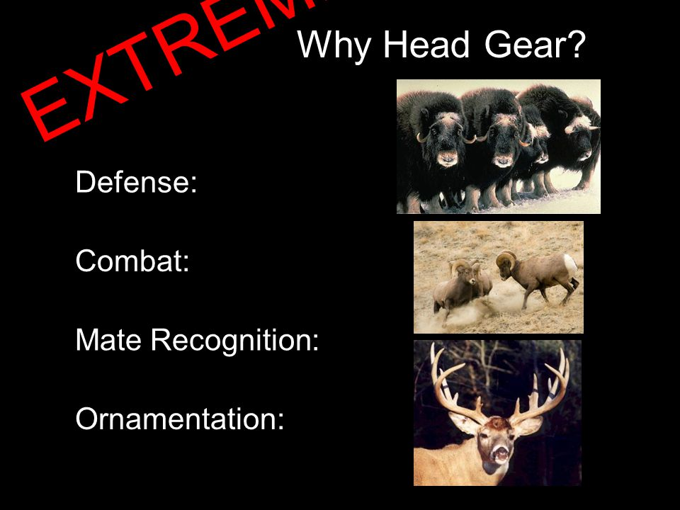 Horns…or Not Horns EXTREME!!!