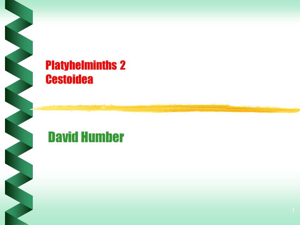 1 Platyhelminths 2 Cestoidea David Humber