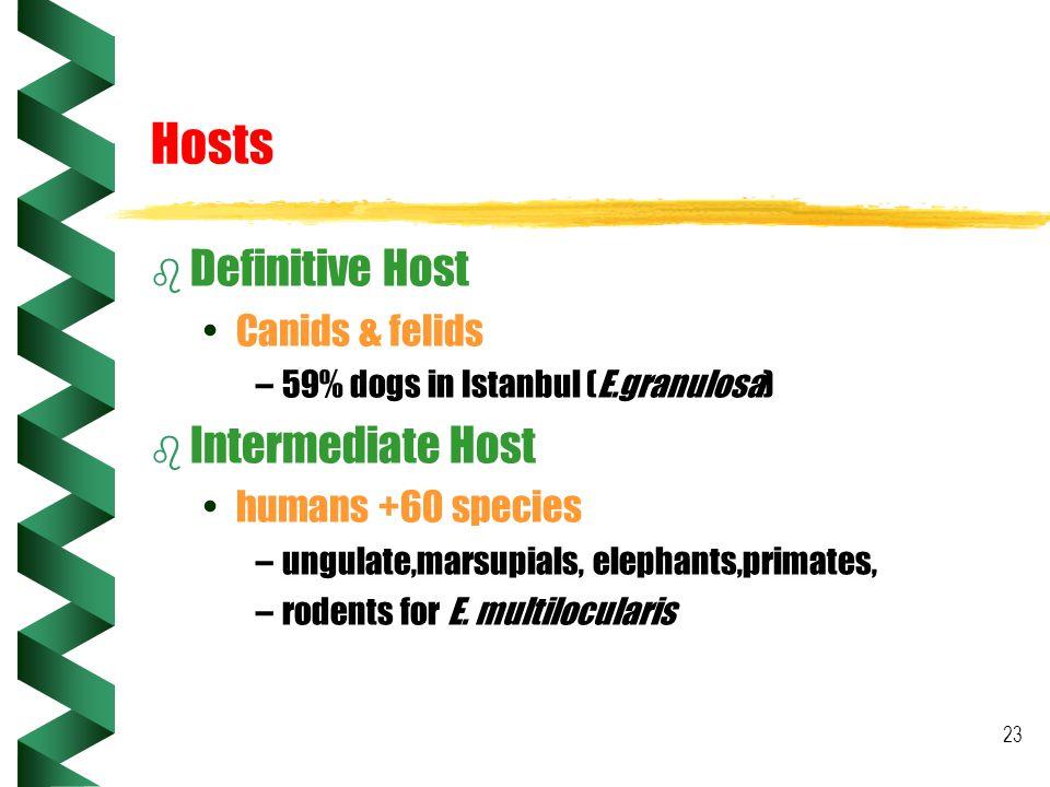 23 Hosts b Definitive Host Canids & felids –59% dogs in Istanbul (E.granulosa) b Intermediate Host humans +60 species –ungulate,marsupials, elephants,