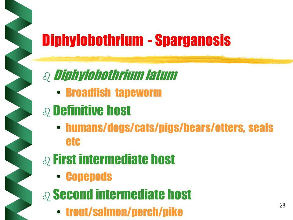 28 Diphylobothrium - Sparganosis b Diphylobothrium latum Broadfish tapeworm b Definitive host humans/dogs/cats/pigs/bears/otters, seals etc b First in