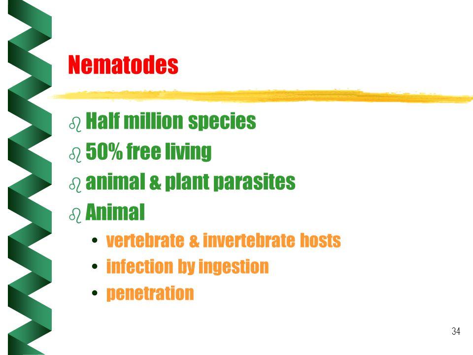 34 Nematodes b Half million species b 50% free living b animal & plant parasites b Animal vertebrate & invertebrate hosts infection by ingestion penet