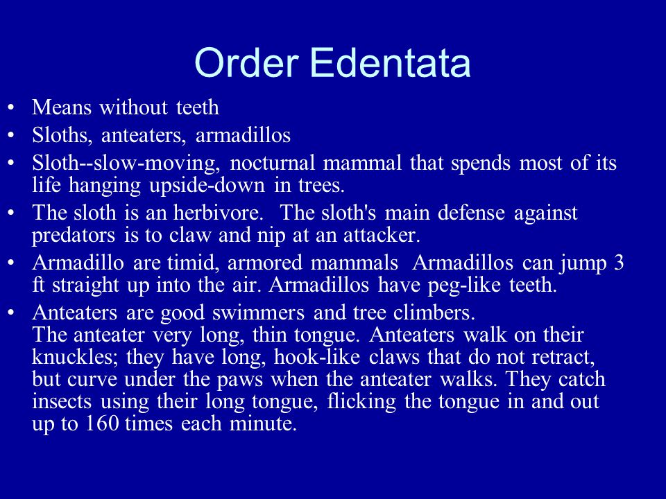 Order Edentata Means without teeth Sloths, anteaters, armadillos Sloth--slow-moving, nocturnal mammal that spends most of its life hanging upside-down in trees.