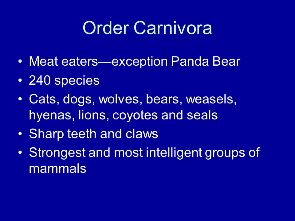 Order Carnivora Meat eaters—exception Panda Bear 240 species Cats, dogs, wolves, bears, weasels, hyenas, lions, coyotes and seals Sharp teeth and claws Strongest and most intelligent groups of mammals
