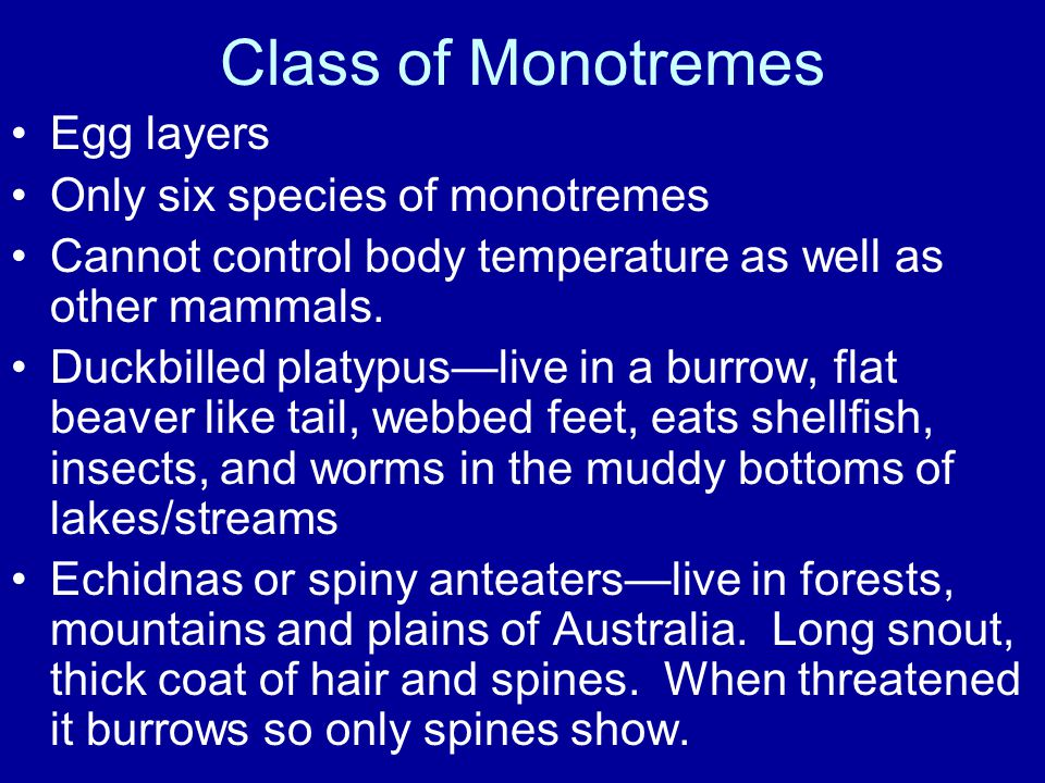 Class of Monotremes Egg layers Only six species of monotremes Cannot control body temperature as well as other mammals.