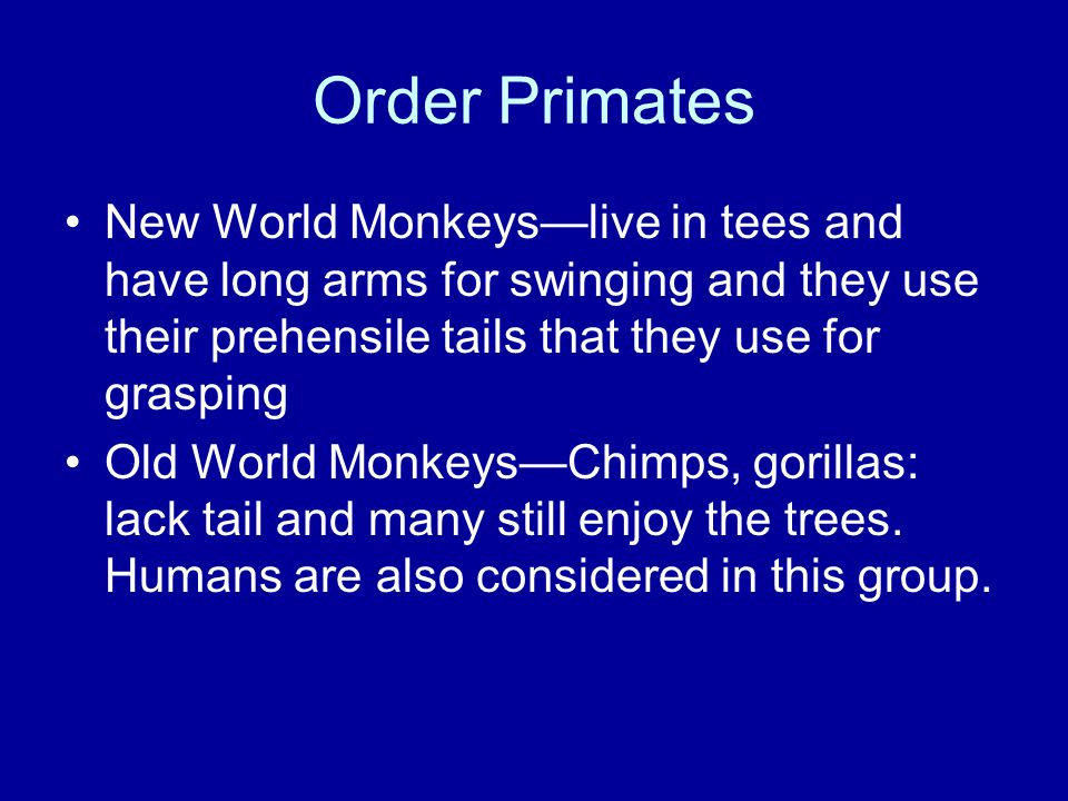 Order Primates New World Monkeys—live in tees and have long arms for swinging and they use their prehensile tails that they use for grasping Old World Monkeys—Chimps, gorillas: lack tail and many still enjoy the trees.