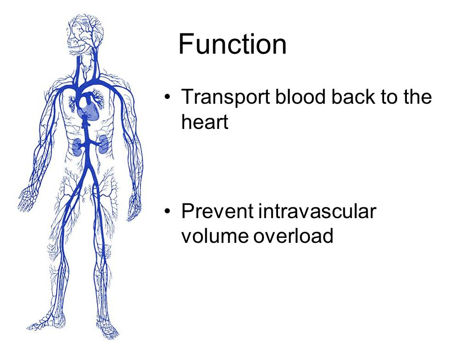 Function Transport blood back to the heart Prevent intravascular volume overload