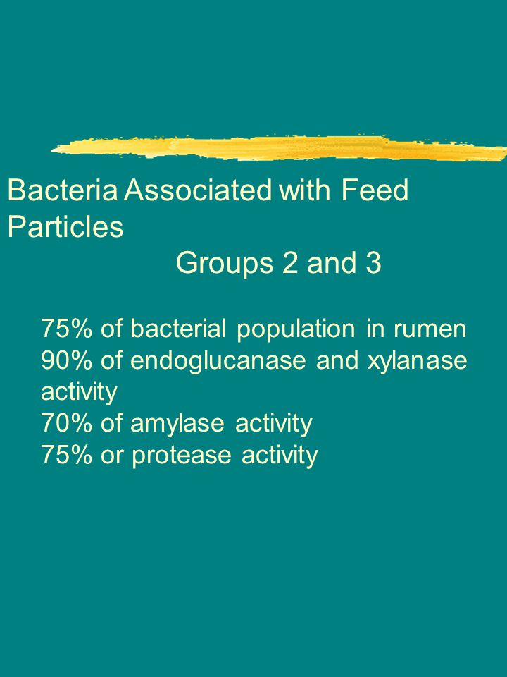 Bacteria Associated with Feed Particles Groups 2 and 3 75% of bacterial population in rumen 90% of endoglucanase and xylanase activity 70% of amylase activity 75% or protease activity