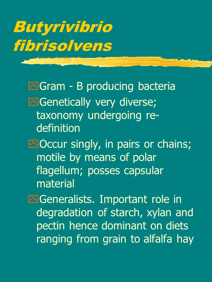 Butyrivibrio fibrisolvens yGram - B producing bacteria yGenetically very diverse; taxonomy undergoing re- definition yOccur singly, in pairs or chains; motile by means of polar flagellum; posses capsular material yGeneralists.
