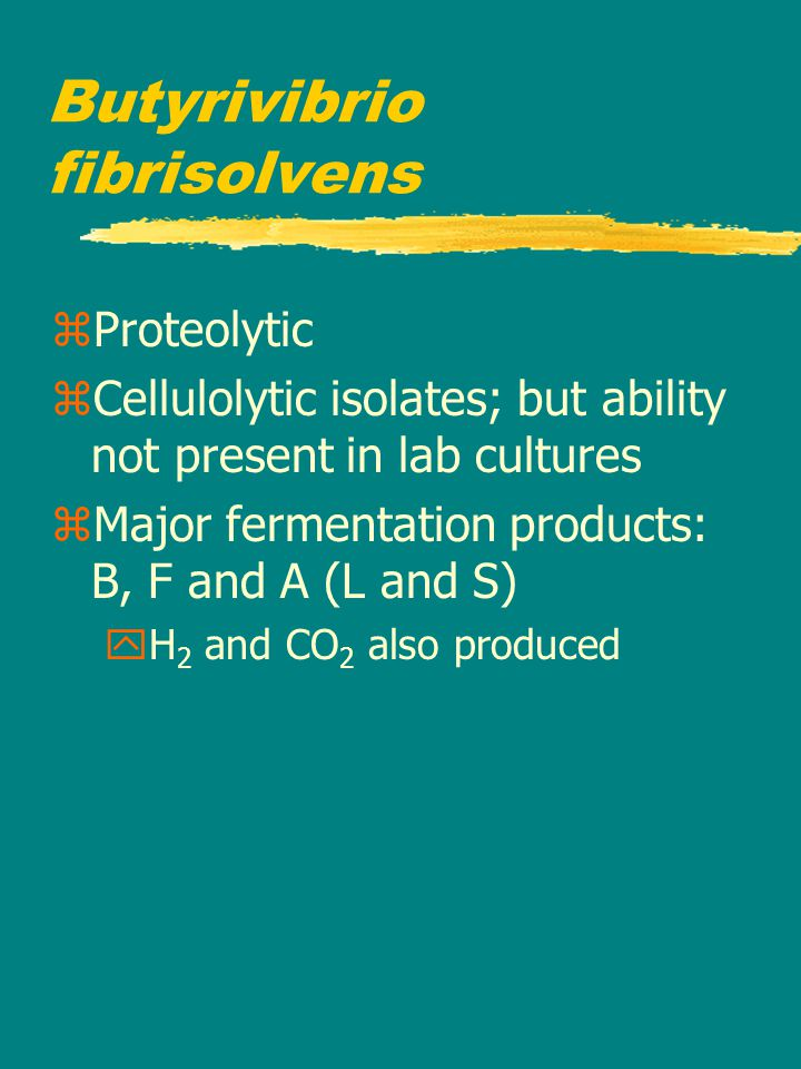 Butyrivibrio fibrisolvens zProteolytic zCellulolytic isolates; but ability not present in lab cultures zMajor fermentation products: B, F and A (L and S) yH 2 and CO 2 also produced