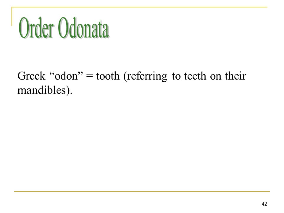 42 Greek odon = tooth (referring to teeth on their mandibles).