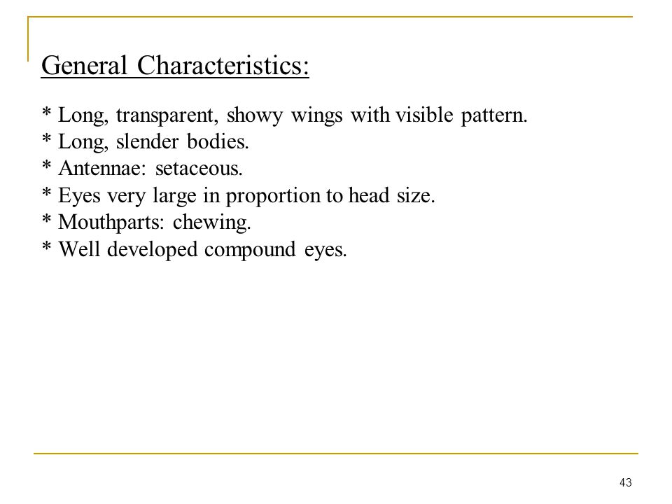 43 General Characteristics: * Long, transparent, showy wings with visible pattern. * Long, slender bodies. * Antennae: setaceous. * Eyes very large in