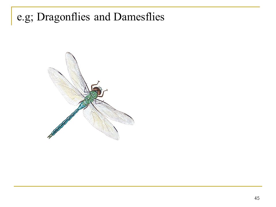 45 e.g; Dragonflies and Damesflies