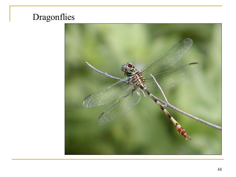 46 Dragonflies