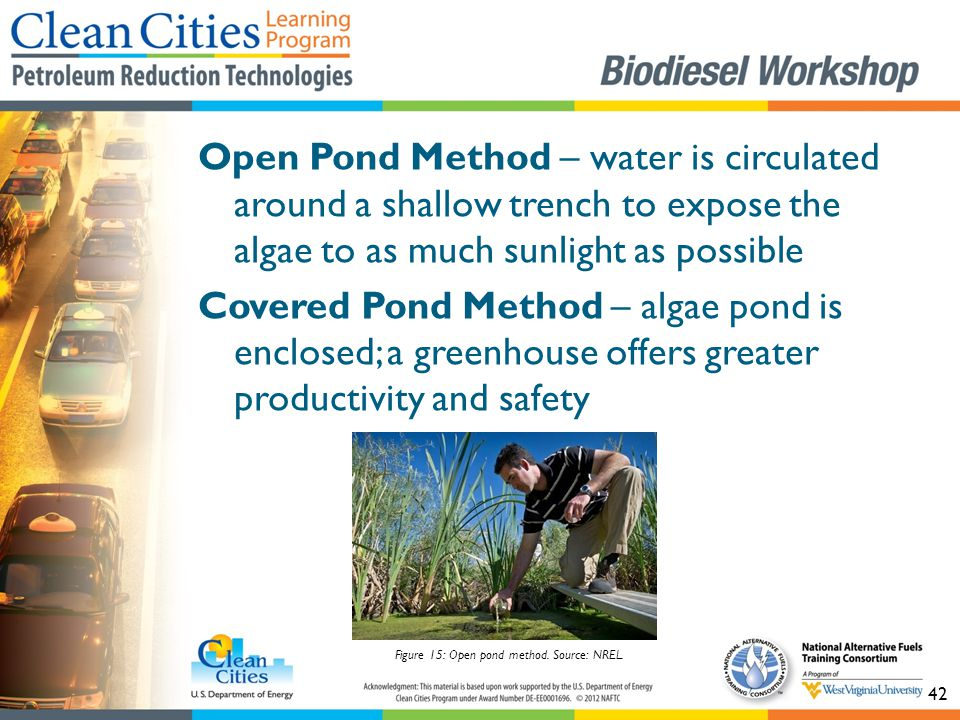 42 Open Pond Method – water is circulated around a shallow trench to expose the algae to as much sunlight as possible Covered Pond Method – algae pond is enclosed; a greenhouse offers greater productivity and safety Figure 15: Open pond method.