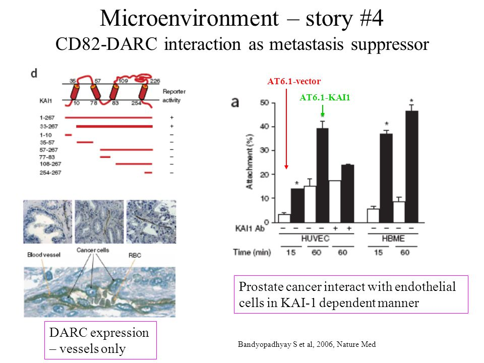 Microenvironment – story #4 CD82-DARC interaction as metastasis suppressor DARC expression – vessels only AT6.1-vector AT6.1-KAI1 Prostate cancer interact with endothelial cells in KAI-1 dependent manner Bandyopadhyay S et al, 2006, Nature Med