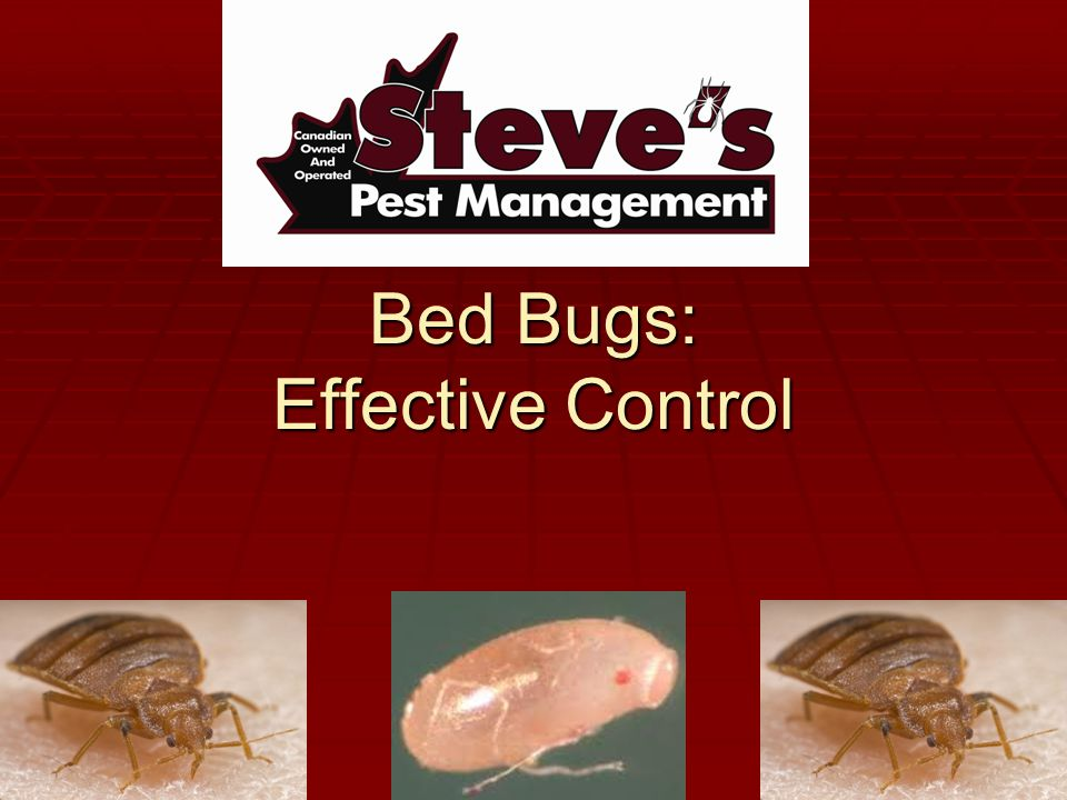 Bed Bugs: Effective Control