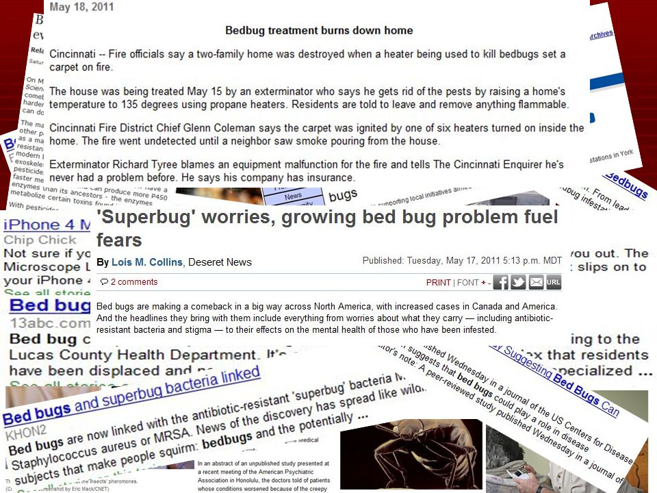 Bed Bugs in the NEWS!