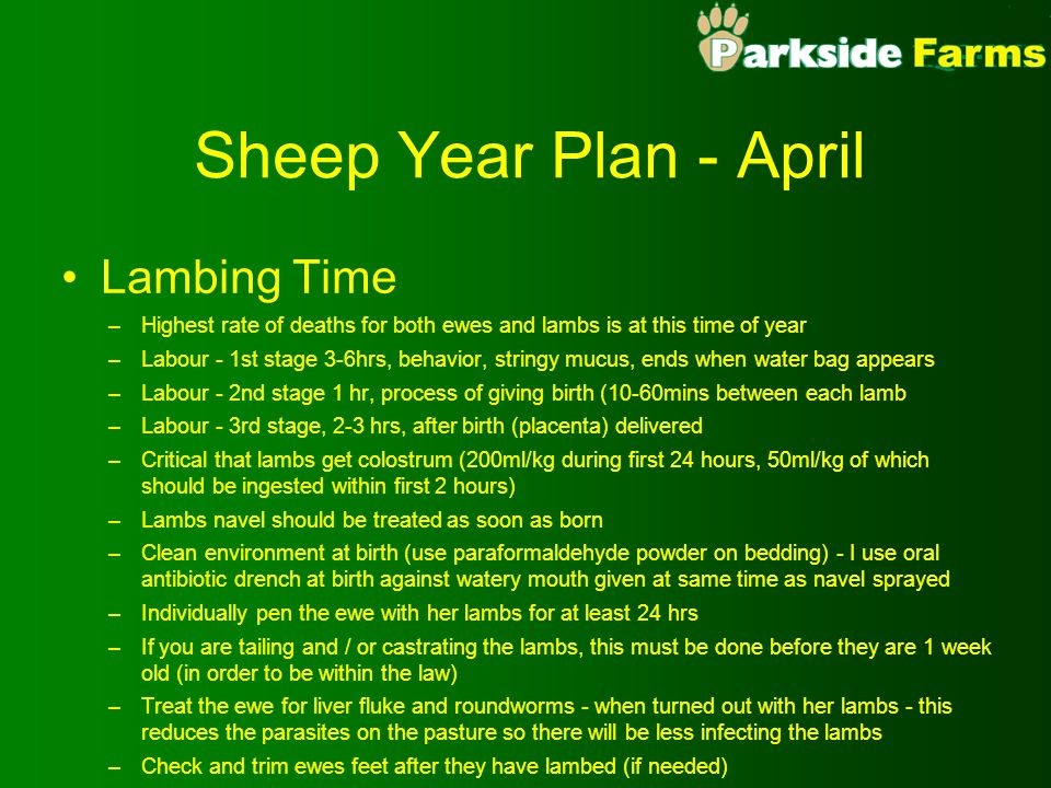 Sheep Year Plan - April Lambing Time –Highest rate of deaths for both ewes and lambs is at this time of year –Labour - 1st stage 3-6hrs, behavior, str