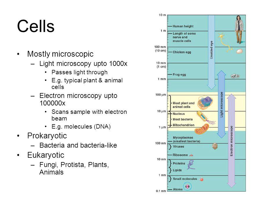 Cells Mostly microscopic –Light microscopy upto 1000x Passes light through E.g.