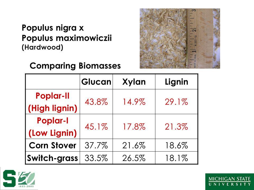 Populus nigra x Populus maximowiczii (Hardwood) Comparing Biomasses GlucanXylanLignin Poplar-II (High lignin) 43.8%14.9%29.1% Poplar-I (Low Lignin) 45.1%17.8%21.3% Corn Stover 37.7%21.6%18.6% Switch-grass 33.5%26.5%18.1%