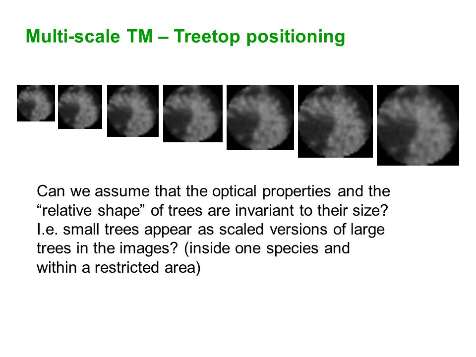 Multi-scale TM – Treetop positioning Can we assume that the optical properties and the relative shape of trees are invariant to their size.