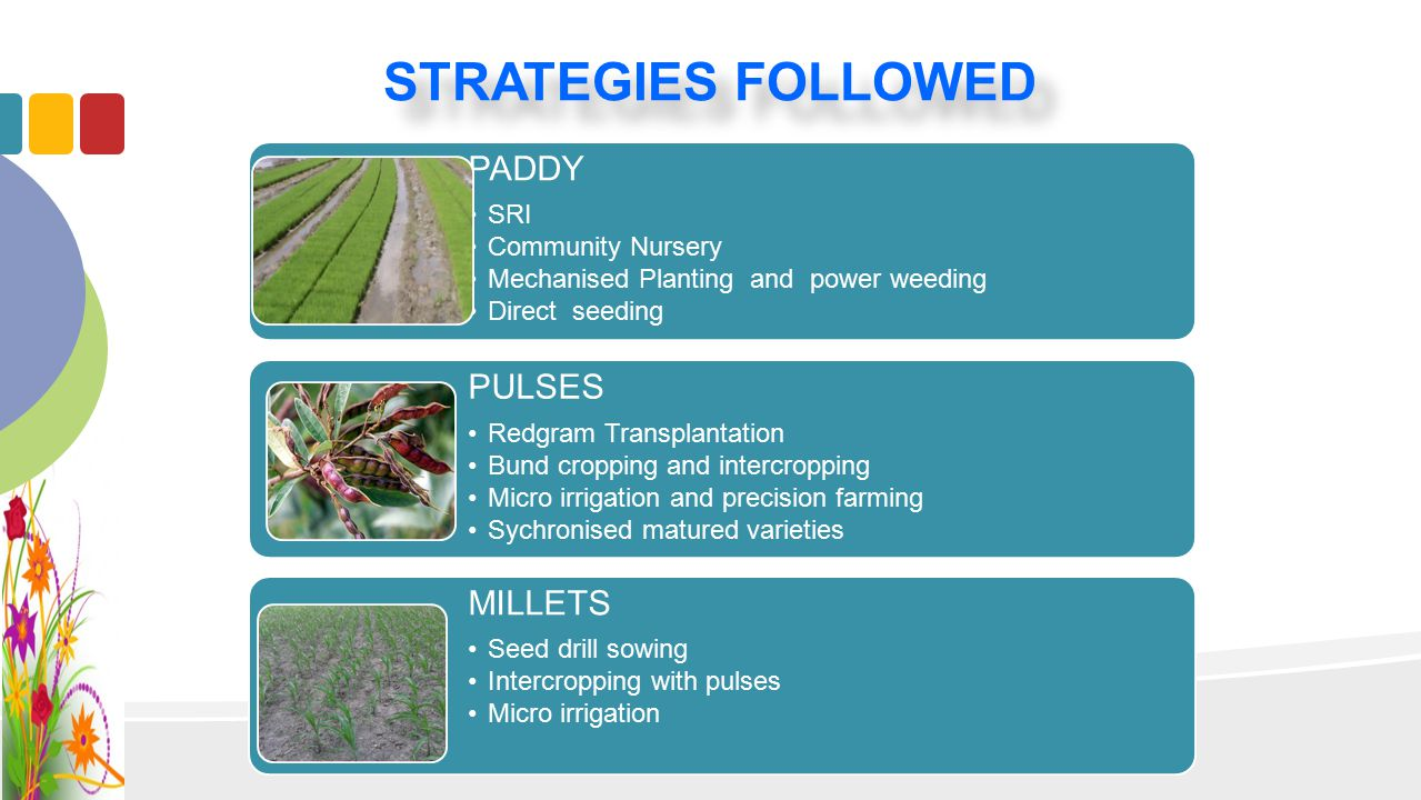 STRATEGIES FOLLOWED PADDY SRI Community Nursery Mechanised Planting and power weeding Direct seeding PULSES Redgram Transplantation Bund cropping and