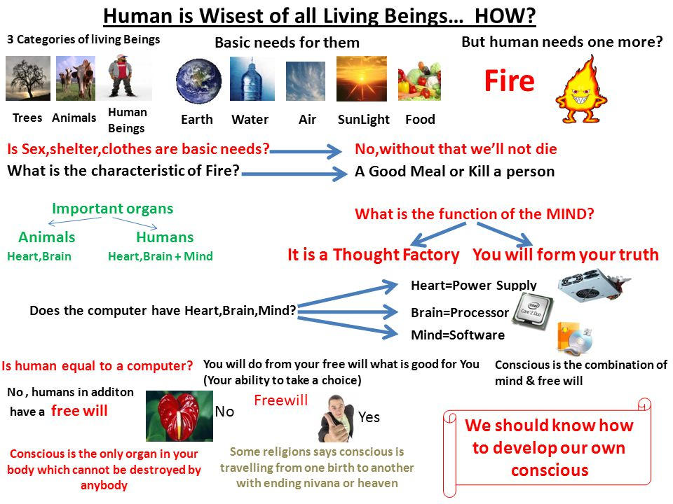 Human is Wisest of all Living Beings… HOW.