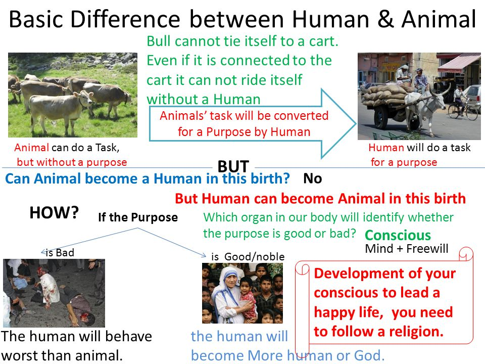 Basic Difference between Human & Animal Animal can do a Task, but without a purpose Human will do a task for a purpose Animals' task will be converted for a Purpose by Human BUT HOW.