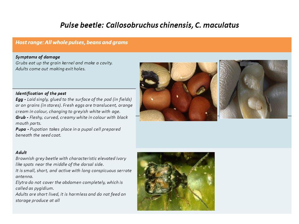 Angoumois grain moth or Grain moth: Sitotroga cerealella Host range: Paddy, maize, jowar, barley and wheat (rarely).