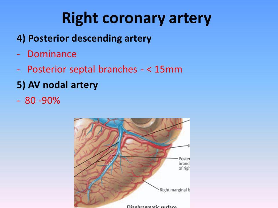 Right coronary artery 4) Posterior descending artery -Dominance -Posterior septal branches - < 15mm 5) AV nodal artery - 80 -90%