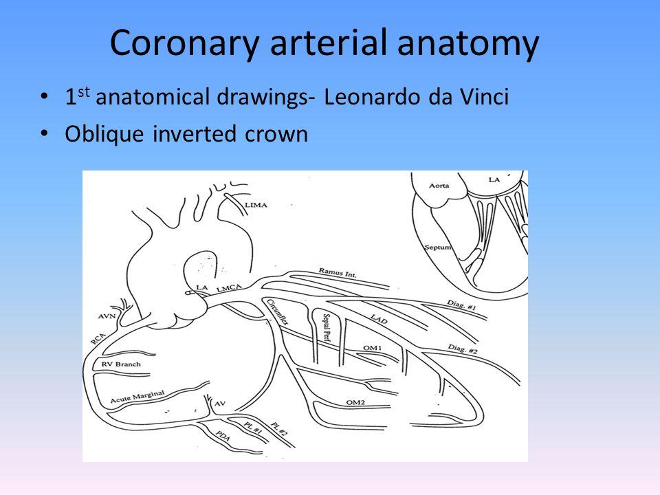 Coronary arterial anatomy 1 st anatomical drawings- Leonardo da Vinci Oblique inverted crown