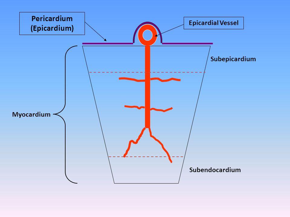 Epicardial Vessel Subepicardium Subendocardium Myocardium Pericardium (Epicardium)