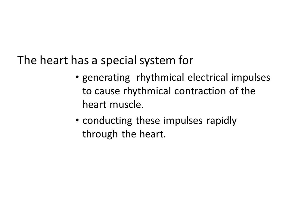 Conduction in the Cardiac Muscle Once the impulse reaches the ends of the Purkinje fibers it is transmitted through the ventricular muscle mass by the ventricular muscle fibers themselves.