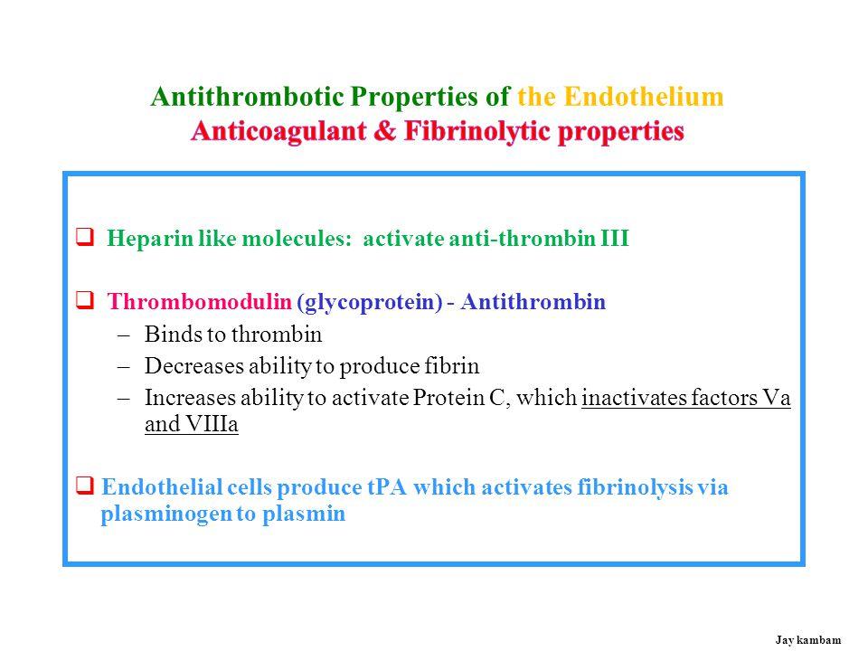 Antithrombotic Properties of Endothelium Jay kambam