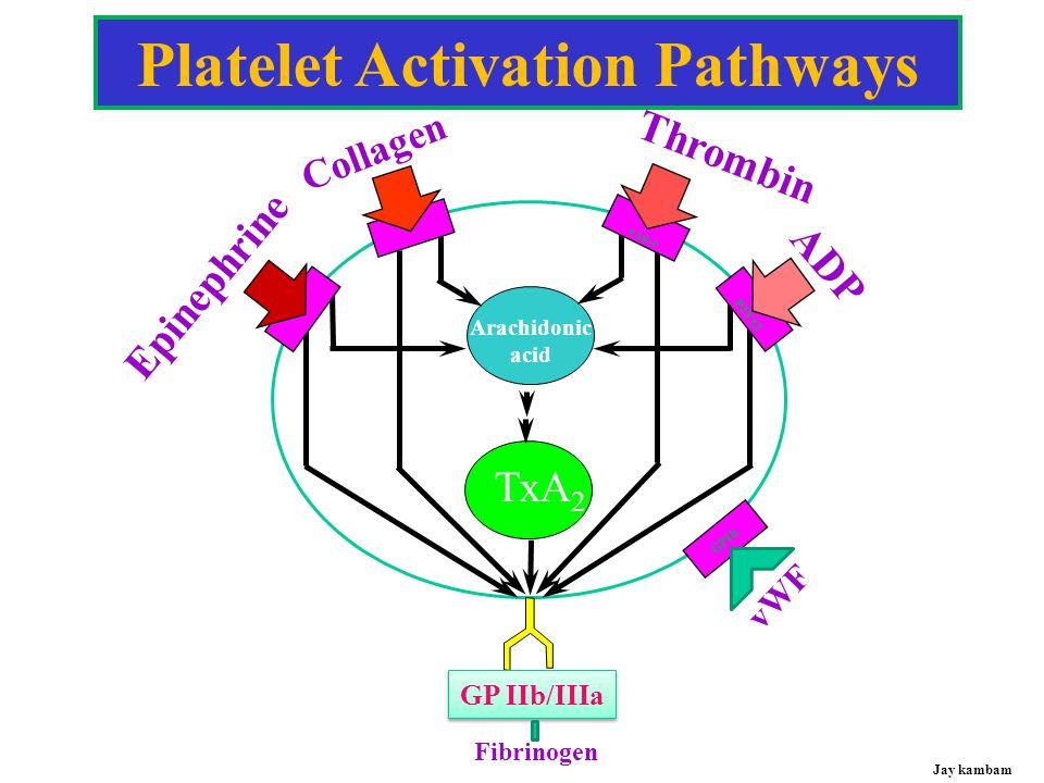 PLATELET FUNCTION AGGREGATION  GPIIb/IIIa - fibrinogen interaction  Key step for hemostasis, part of final common pathway  Therapeutic target of inhibitors Jay kambam
