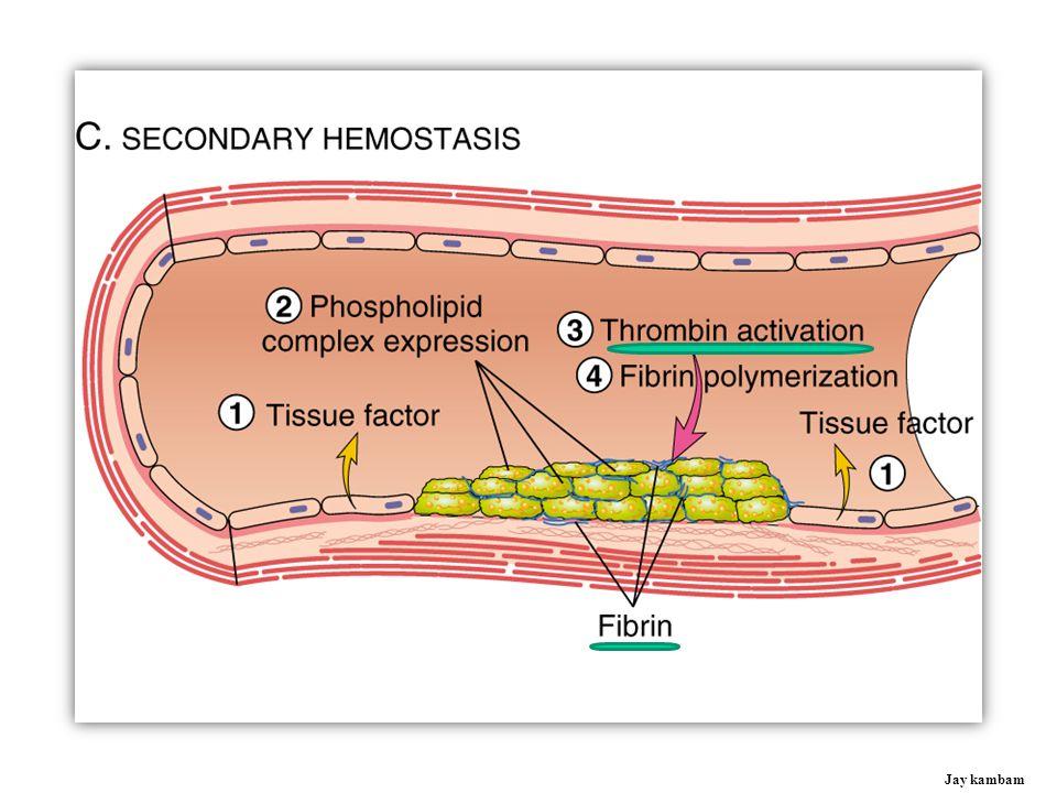Fibrinogen I Fibrin Thrombin IIa Prothrombin II VIIa TF IIIa IXa VIIIa XIa XIIa XIIIa Soft clot Fibrin Hard clot V VIII Jay kambam