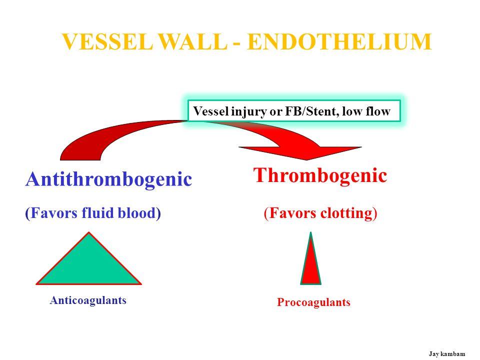 VESSEL WALL - ENDOTHELIUM