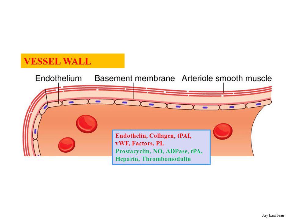 Antithrombogenic Thrombogenic Vessel injury or FB/Stent, low flow (Favors fluid blood)(Favors clotting) Anticoagulants Procoagulants Jay kambam VESSEL WALL - ENDOTHELIUM