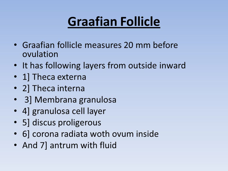 Graafian Follicle Graafian follicle measures 20 mm before ovulation It has following layers from outside inward 1] Theca externa 2] Theca interna 3] Membrana granulosa 4] granulosa cell layer 5] discus proligerous 6] corona radiata woth ovum inside And 7] antrum with fluid