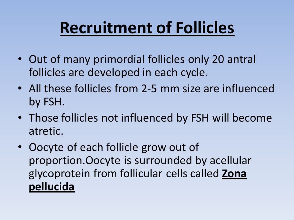 Recruitment of Follicles Out of many primordial follicles only 20 antral follicles are developed in each cycle.