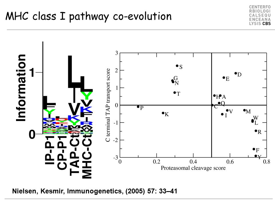 MHC class I pathway co-evolution Nielsen, Kesmir, Immunogenetics, (2005) 57: 33–41