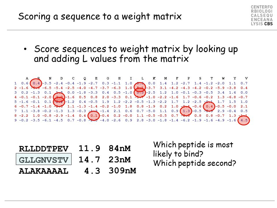 Score sequences to weight matrix by looking up and adding L values from the matrix A R N D C Q E G H I L K M F P S T W Y V 1 0.6 0.4 -3.5 -2.4 -0.4 -1.9 -2.7 0.3 -1.1 1.0 0.3 0.0 1.4 1.2 -2.7 1.4 -1.2 -2.0 1.1 0.7 2 -1.6 -6.6 -6.5 -5.4 -2.5 -4.0 -4.7 -3.7 -6.3 1.0 5.1 -3.7 3.1 -4.2 -4.3 -4.2 -0.2 -5.9 -3.8 0.4 3 0.2 -1.3 0.1 1.5 0.0 -1.8 -3.3 0.4 0.5 -1.0 0.3 -2.5 1.2 1.0 -0.1 -0.3 -0.5 3.4 1.6 0.0 4 -0.1 -0.1 -2.0 2.0 -1.6 0.5 0.8 2.0 -3.3 0.1 -1.7 -1.0 -2.2 -1.6 1.7 -0.6 -0.2 1.3 -6.8 -0.7 5 -1.6 -0.1 0.1 -2.2 -1.2 0.4 -0.5 1.9 1.2 -2.2 -0.5 -1.3 -2.2 1.7 1.2 -2.5 -0.1 1.7 1.5 1.0 6 -0.7 -1.4 -1.0 -2.3 1.1 -1.3 -1.4 -0.2 -1.0 1.8 0.8 -1.9 0.2 1.0 -0.4 -0.6 0.4 -0.5 -0.0 2.1 7 1.1 -3.8 -0.2 -1.3 1.3 -0.3 -1.3 -1.4 2.1 0.6 0.7 -5.0 1.1 0.9 1.3 -0.5 -0.9 2.9 -0.4 0.5 8 -2.2 1.0 -0.8 -2.9 -1.4 0.4 0.1 -0.4 0.2 -0.0 1.1 -0.5 -0.5 0.7 -0.3 0.8 0.8 -0.7 1.3 -1.1 9 -0.2 -3.5 -6.1 -4.5 0.7 -0.8 -2.5 -4.0 -2.6 0.9 2.8 -3.0 -1.8 -1.4 -6.2 -1.9 -1.6 -4.9 -1.6 4.5 Scoring a sequence to a weight matrix RLLDDTPEV GLLGNVSTV ALAKAAAAL Which peptide is most likely to bind.