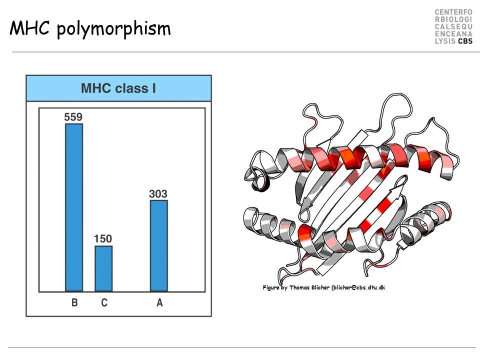 Figure by Thomas Blicher (blicher@cbs.dtu.dk MHC polymorphism