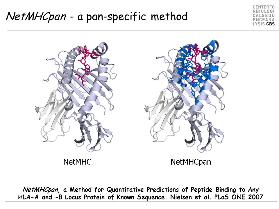 NetMHCpan - a pan-specific method NetMHC NetMHCpan NetMHCpan, a Method for Quantitative Predictions of Peptide Binding to Any HLA-A and -B Locus Protein of Known Sequence.